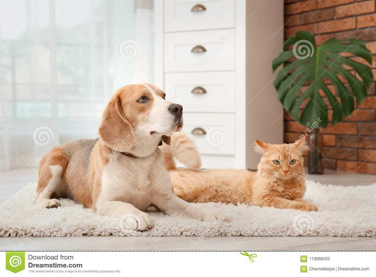 Adorable cat and dog lying on rug at home