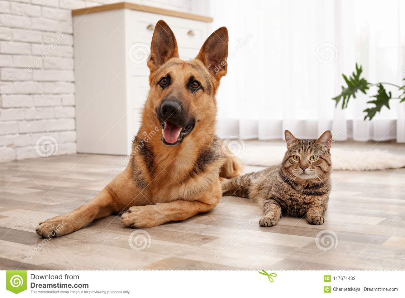 Adorable cat and dog resting together at home
