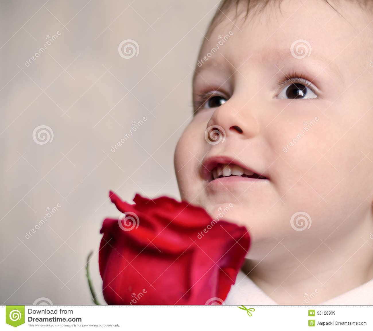Adorable Cherubic Little Boy With A Red Rose Royalty Free ...