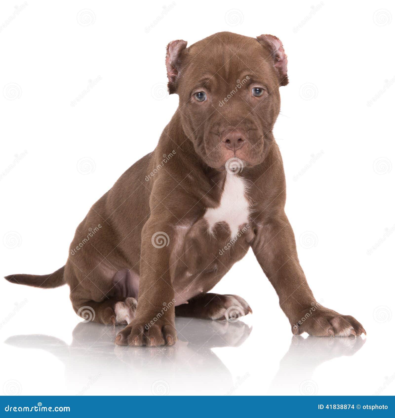 Blue Jack Dog Food