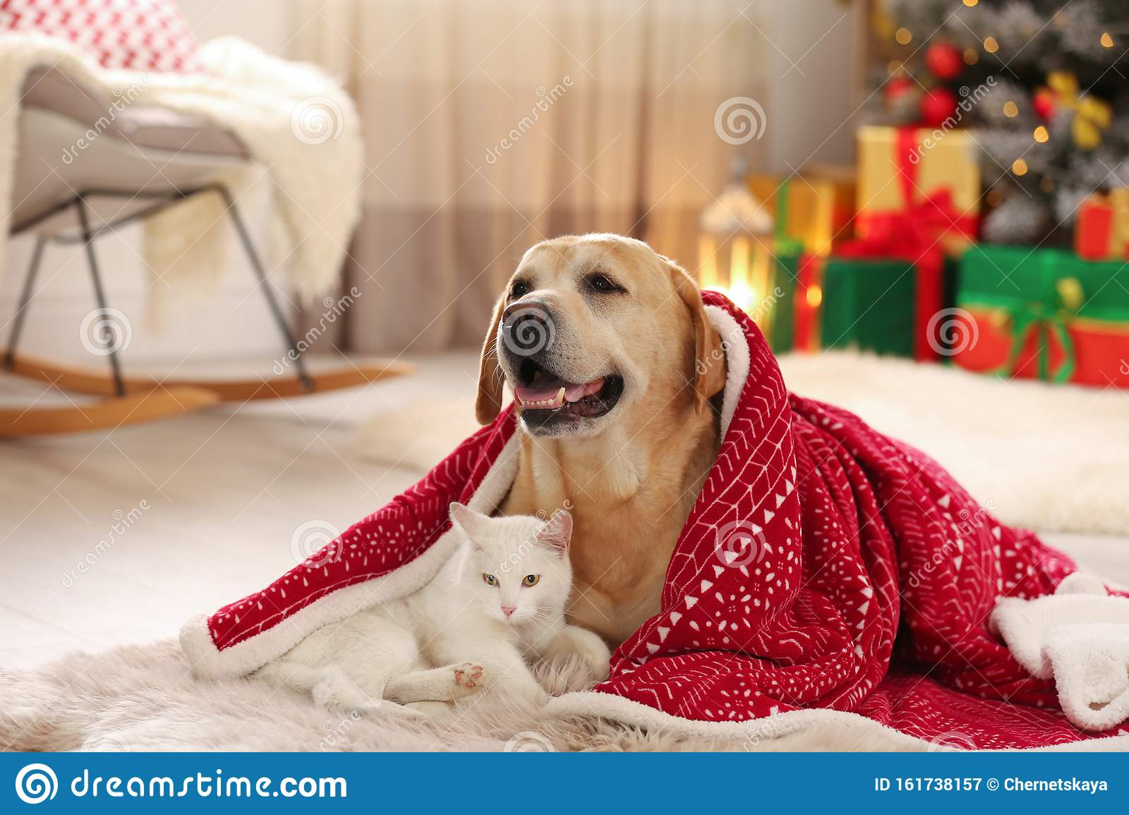 Adorable Dog And Cat Together Under Blanket At Room Decorated For Christmas Stock Image Image Of Color Angora 161738157