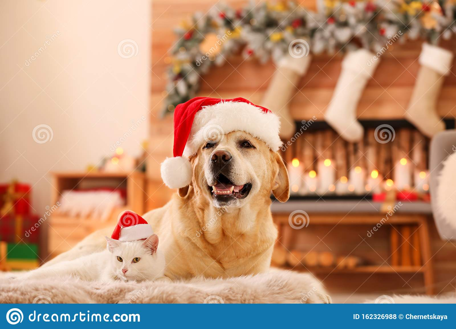 Adorable Dog And Cat Wearing Santa Hats Together At Room Decorated For Christmas Stock Photo Image Of Canine Holiday 162326988