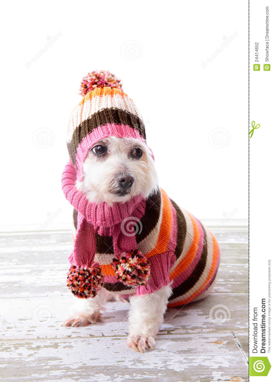 Warm Clothes For Old Dogs
