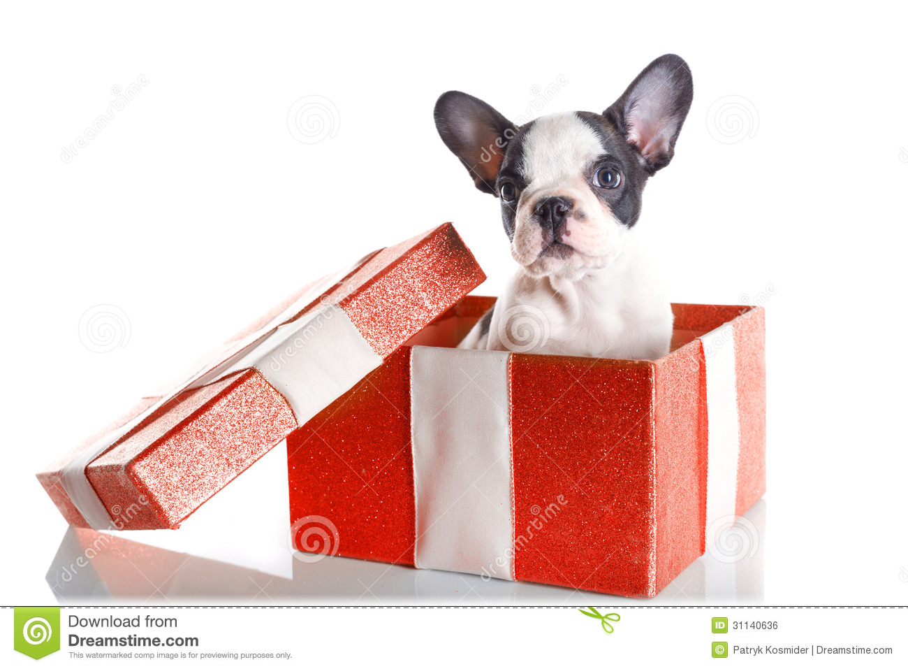 Adorable French Bulldog Puppy In The Gift Box Stock Photo - Image ...