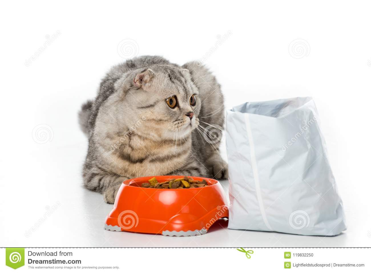 adorable furry cat lying near bowl and pack of cat food on white