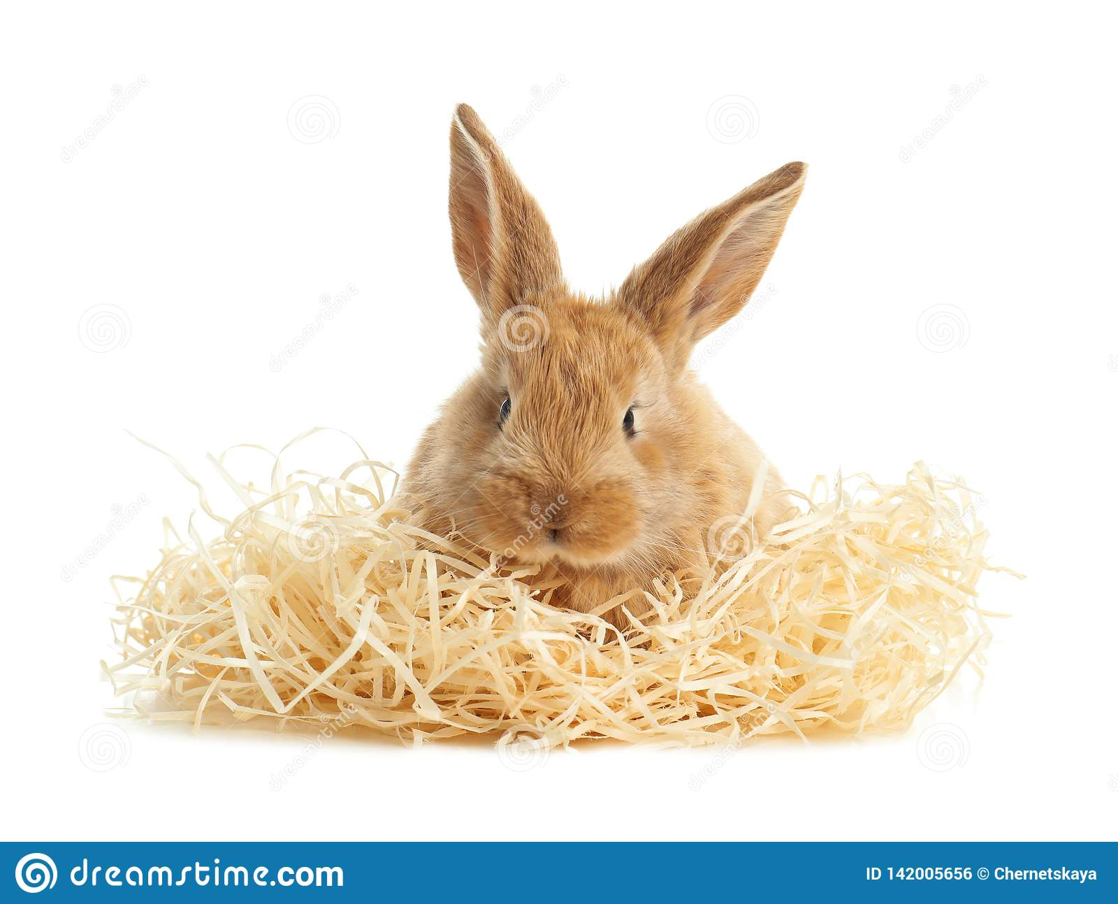 Adorable furry Easter bunny with decorative straw on white