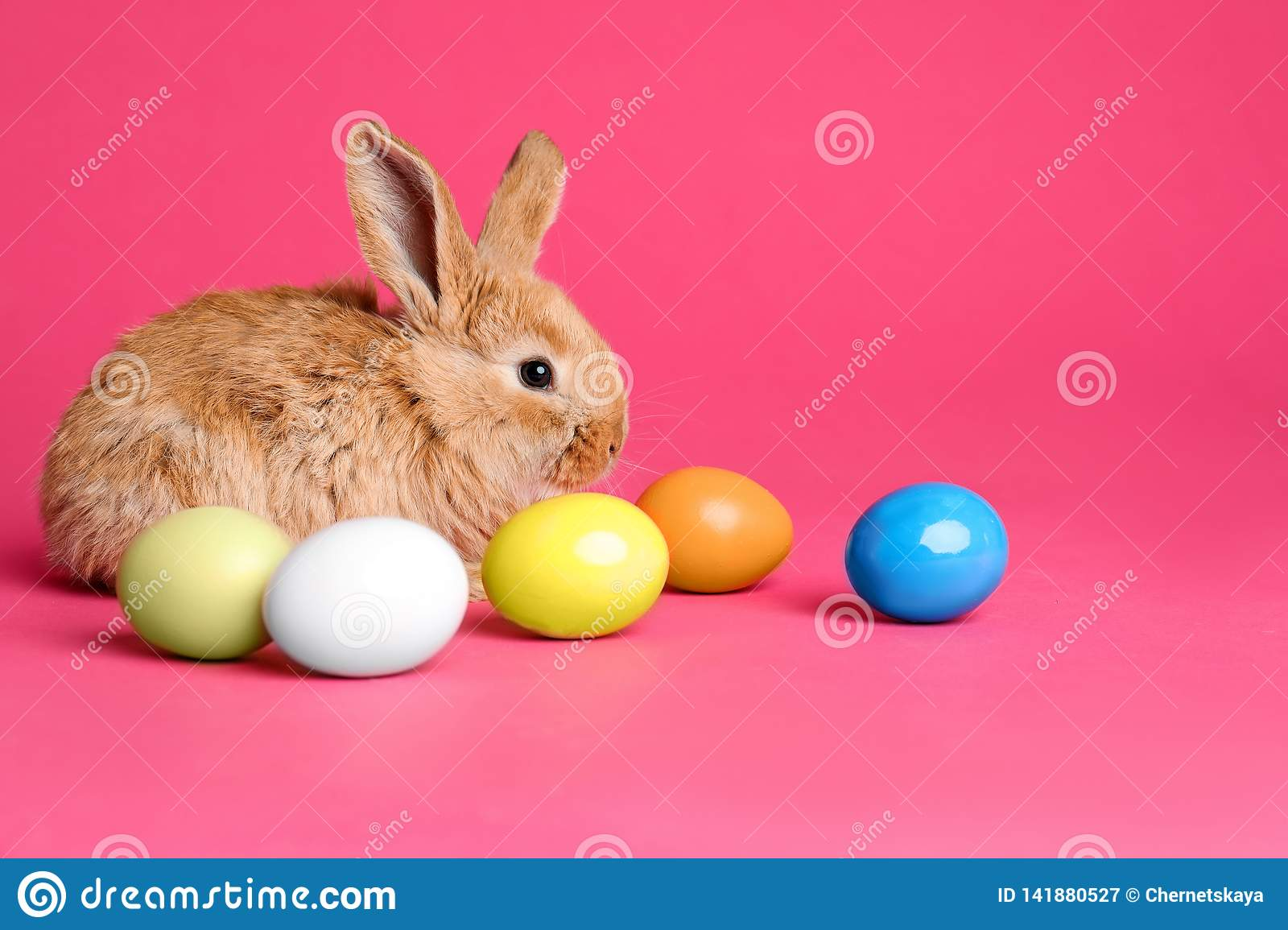 Adorable furry Easter bunny and dyed eggs on color background
