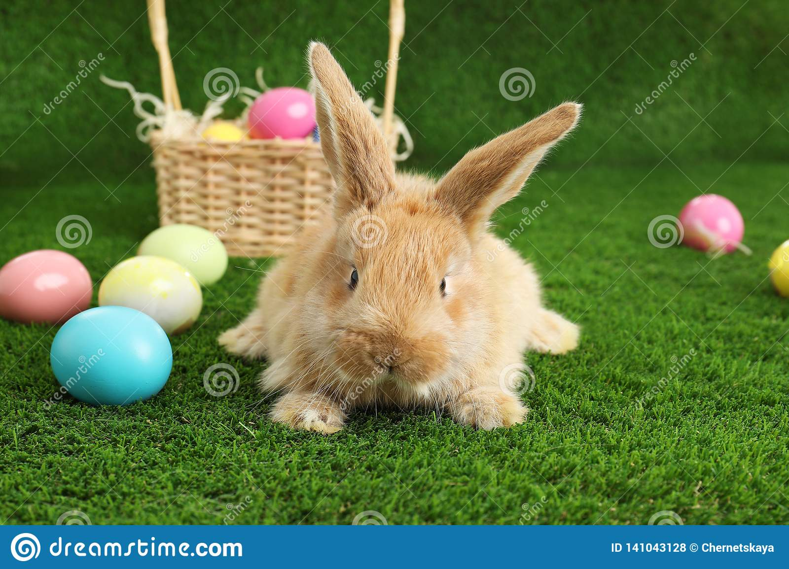 Adorable furry Easter bunny near wicker basket and dyed eggs