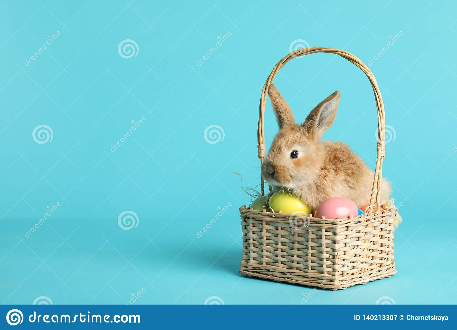 Adorable furry Easter bunny in wicker basket with dyed eggs on color background