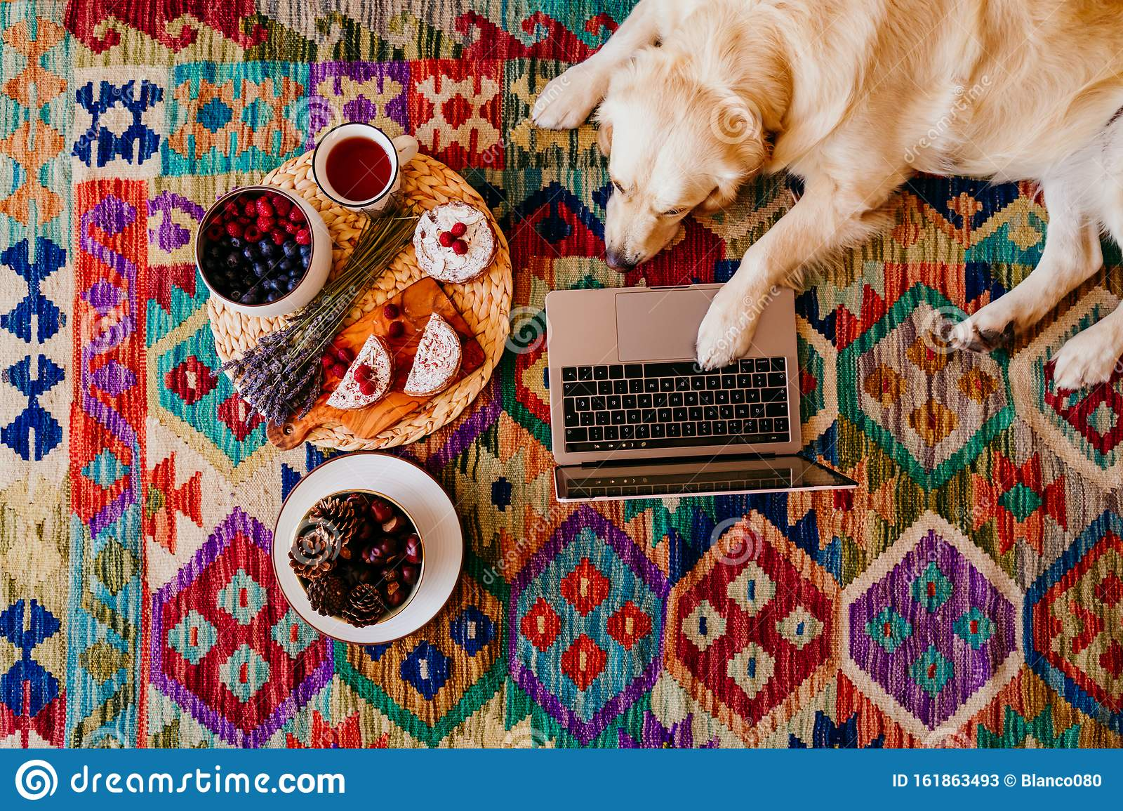 Adorable Golden Retriever Dog Lying On The Floor On A Colorful Carpet Healthy Breakfast Besides Working On Laptop Stock Image Image Of House Laptop 161863493