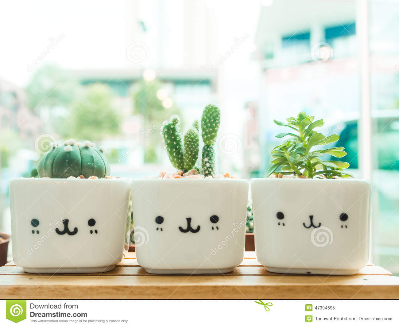 Adorable Indoor Cactus Garden Stock Photo Image 47394695