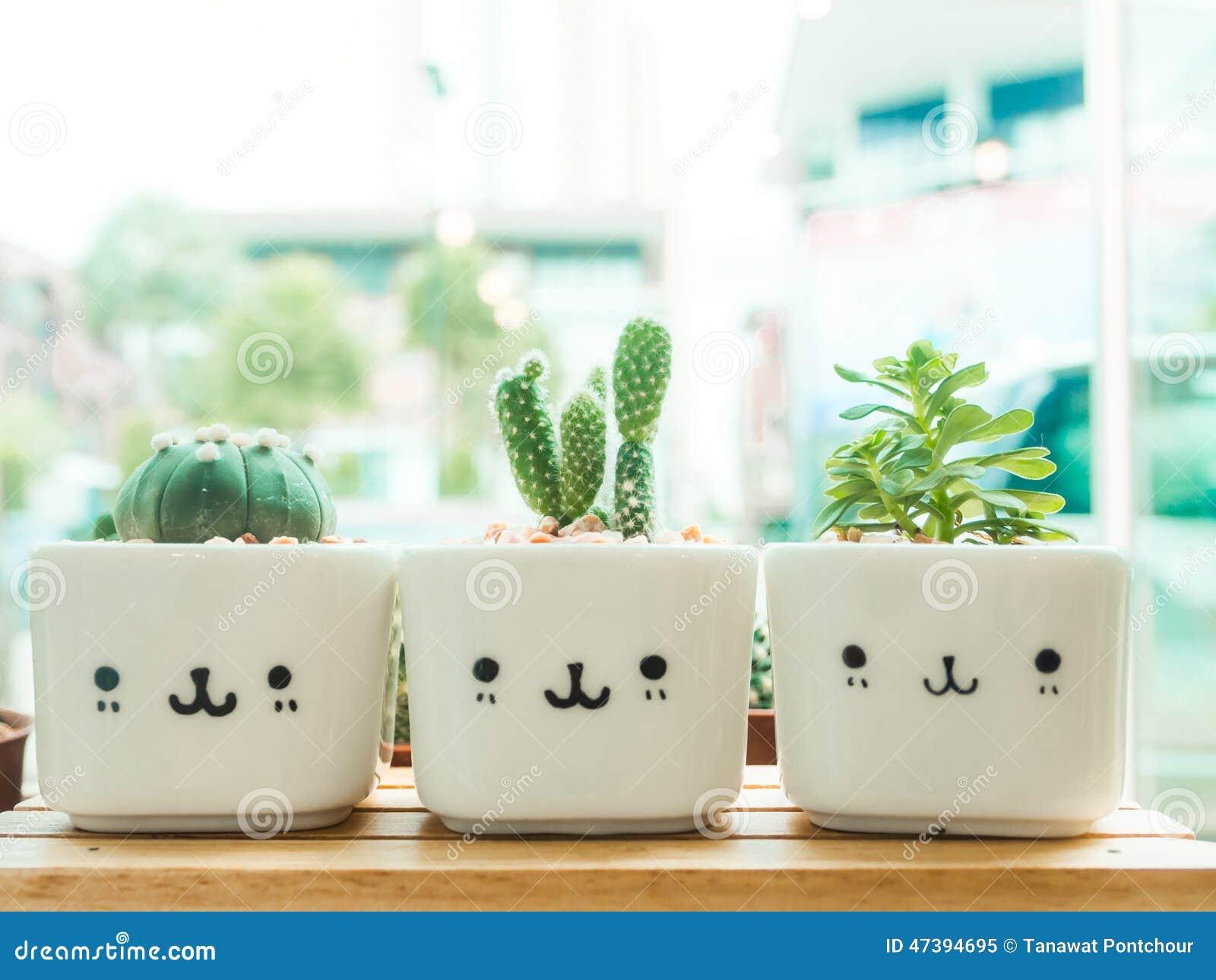 Modern window sill - Adorable Indoor Cactus Garden Stock Photo Image 47394695