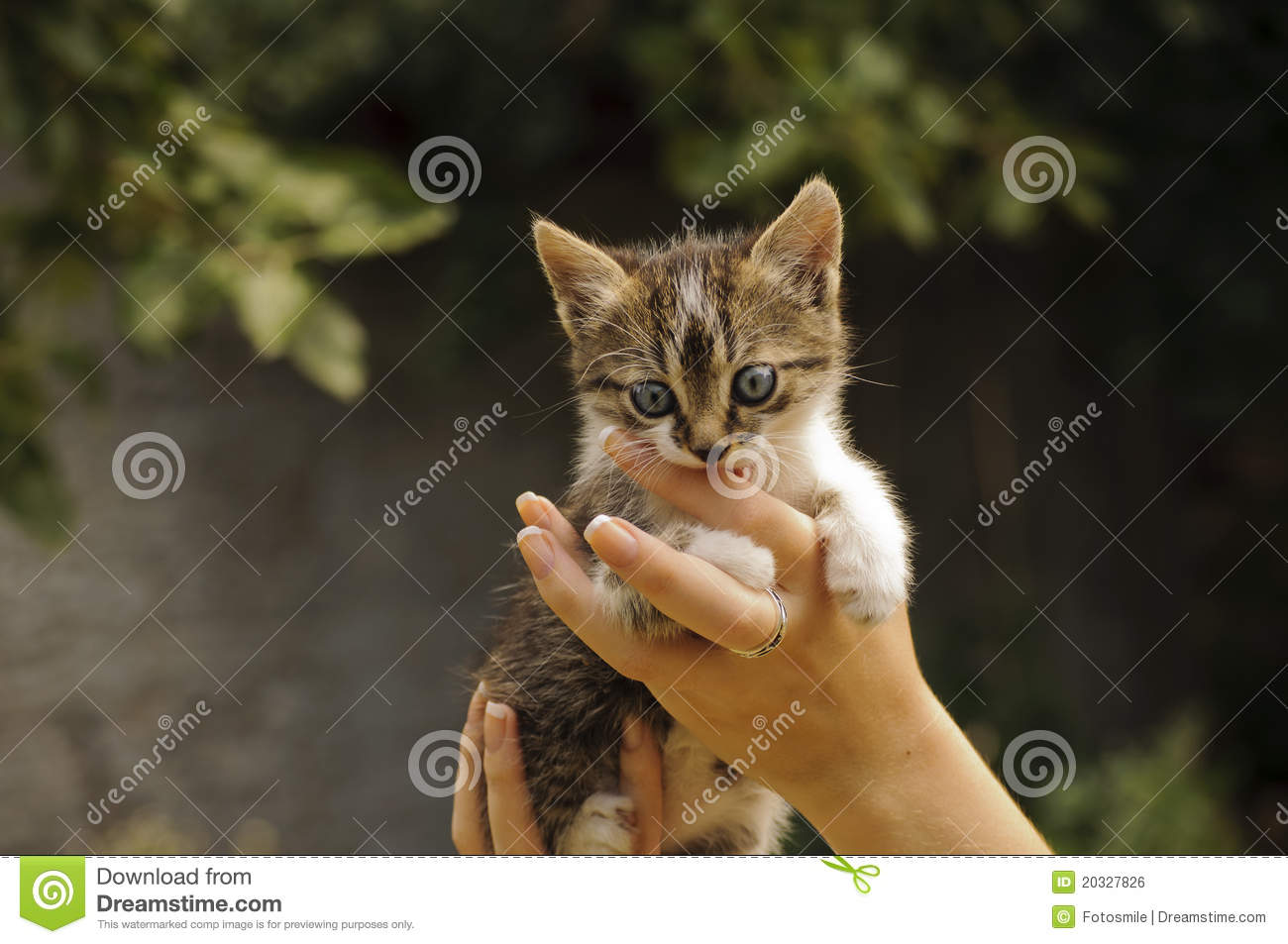 how to stop a kitten from biting fingers