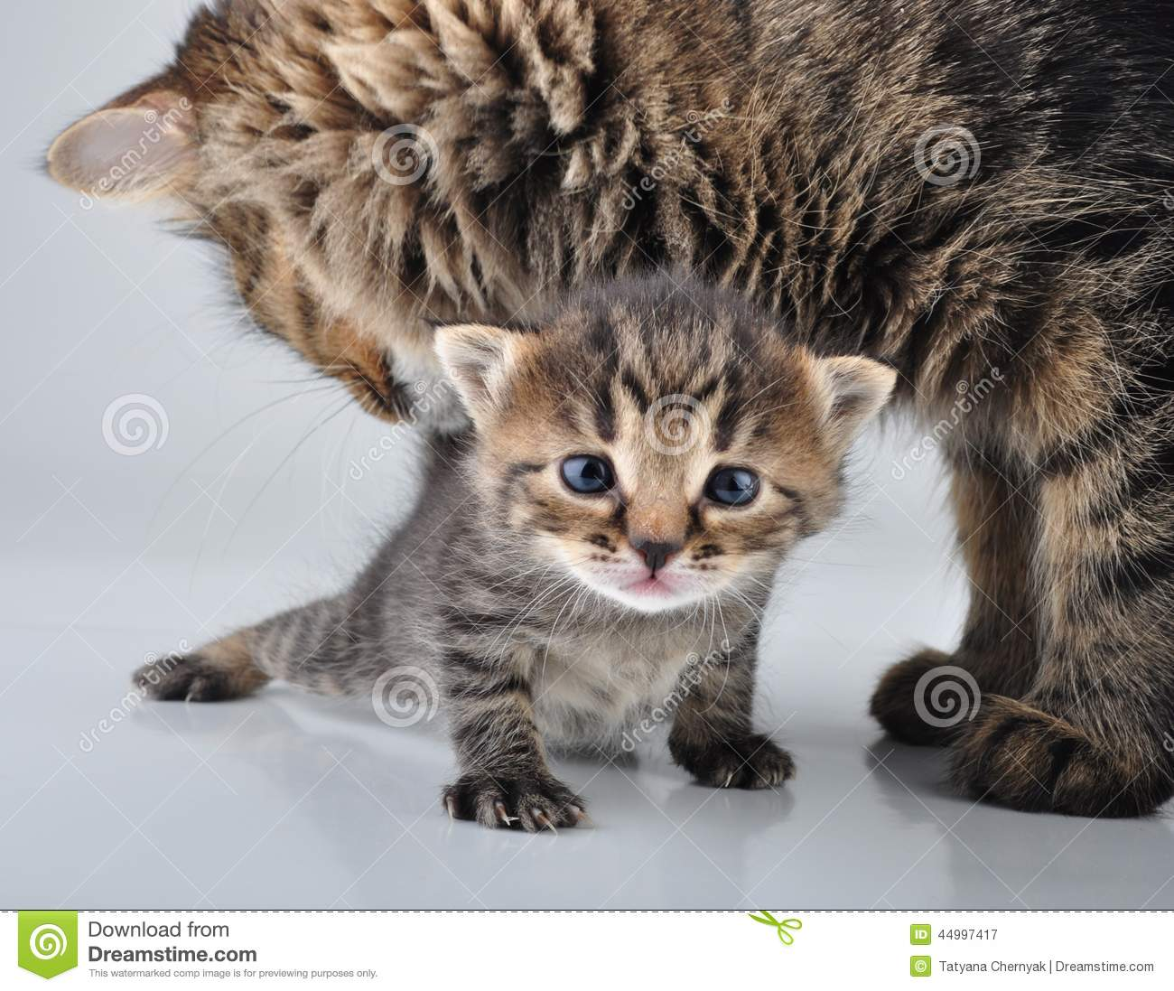 Adorable Newborn Kitten With Mother Stock Image Image
