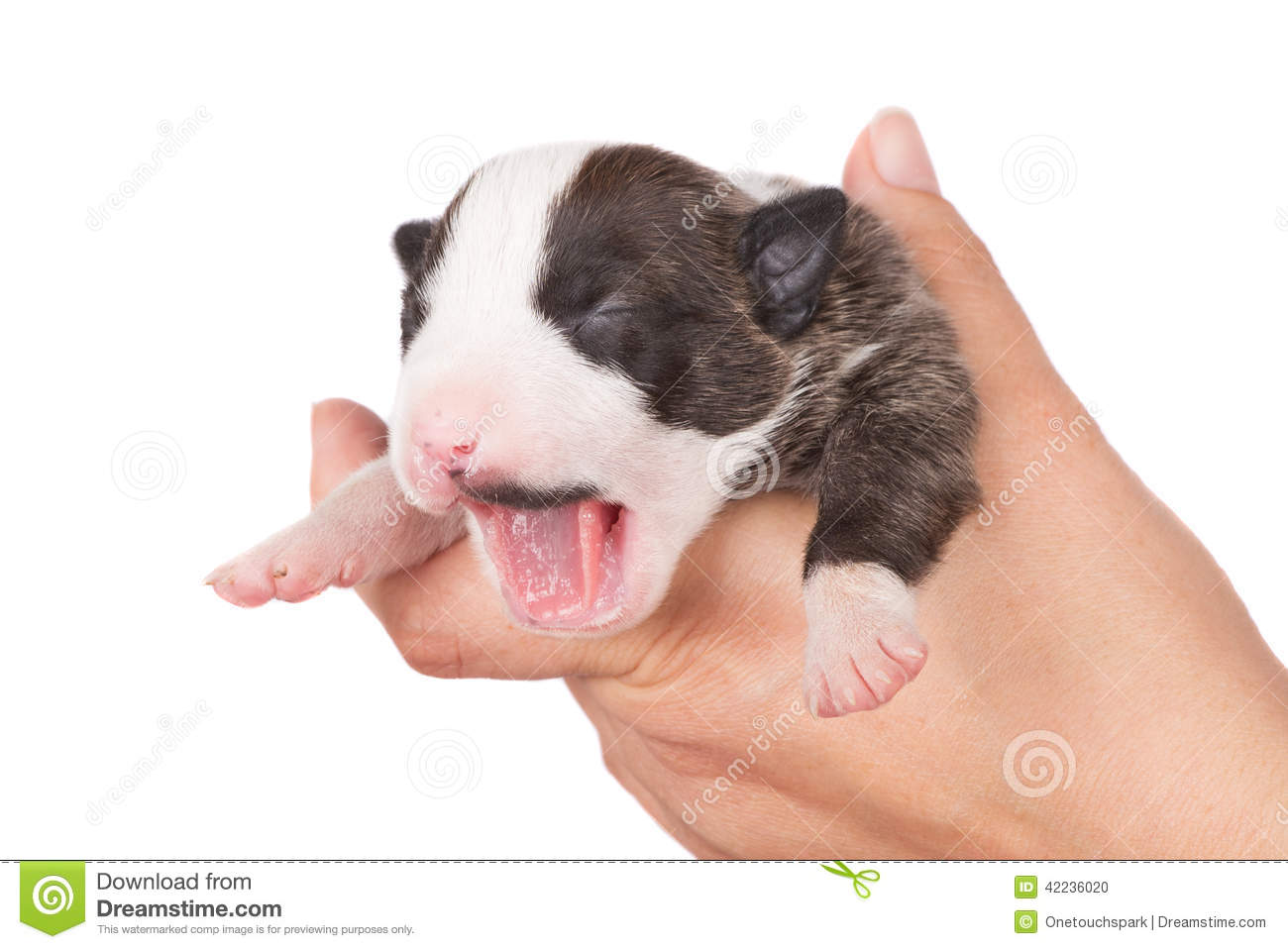 Baby bed for travel - Adorable Newborn Puppy Yawns Stock Photo Image 42236020