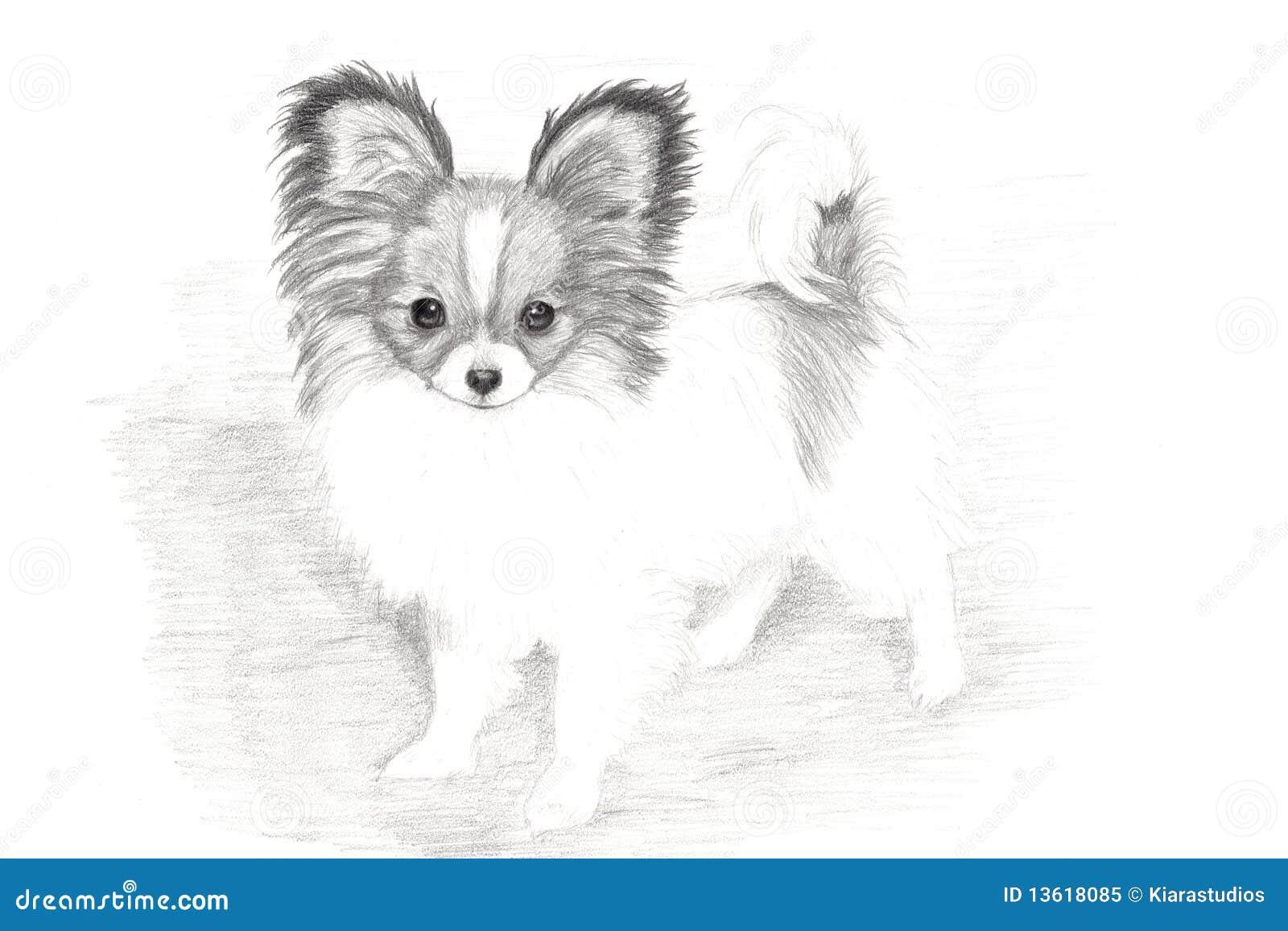 Adorable Papillon Puppy Hand Drawn Art Royalty Free Stock
