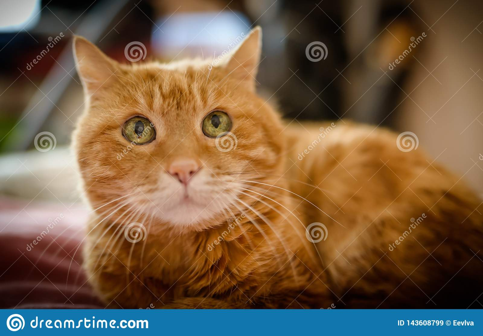 Adorable red cat.