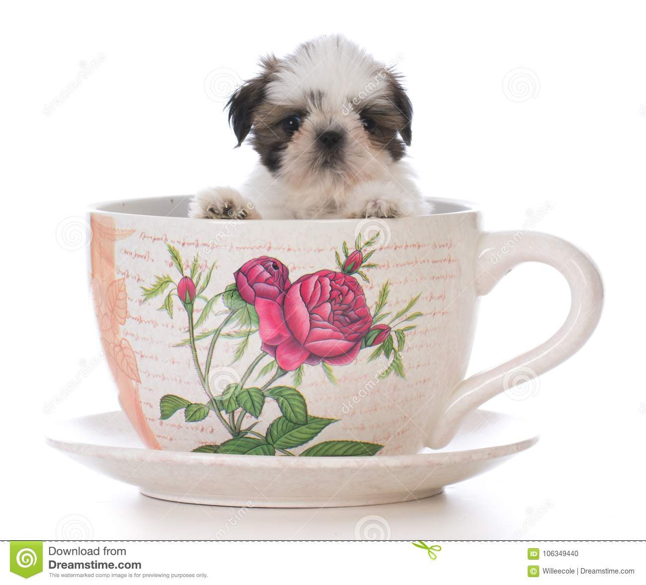 Adorable Shih Tzu Puppy In A Tea Cup Stock Photo Image Of Teacup