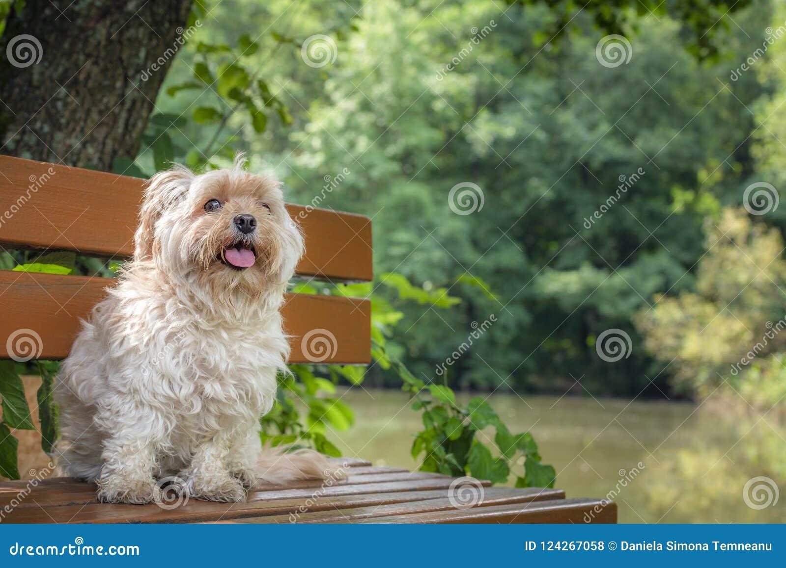 Prime Adorable Small Dog Sitting On A Bench In Nature Stock Photo Frankydiablos Diy Chair Ideas Frankydiabloscom