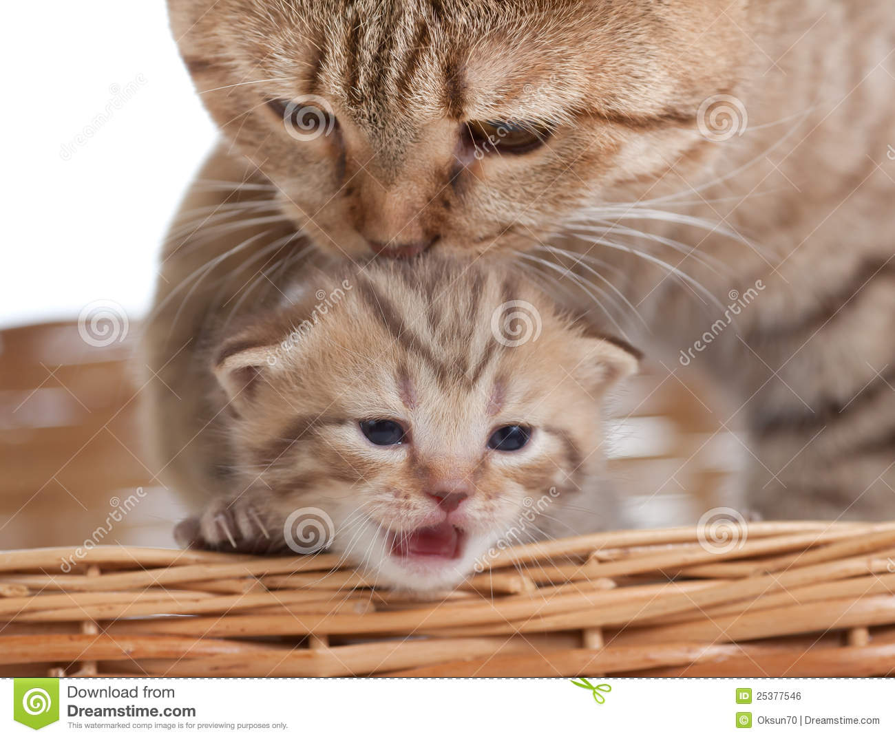 Adorable small kitten with mother cat in basket