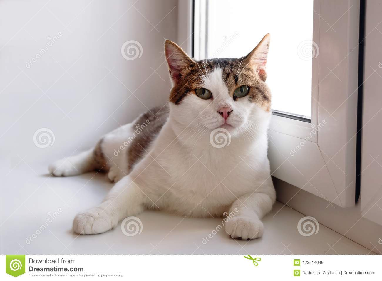 Adorable white tabby cat with green eyes is sitting near to the window and looking into the camera.