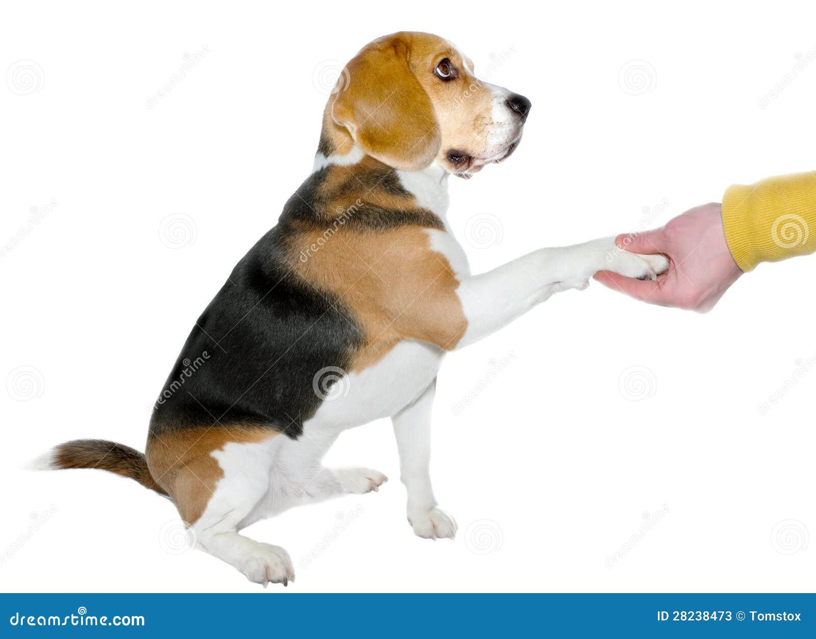 Adotando um cão