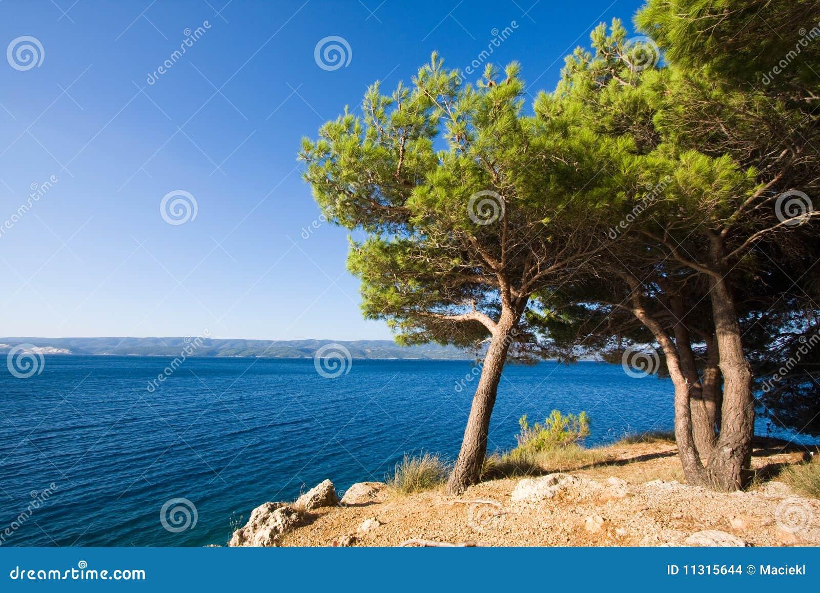 Adriatische Bäume
