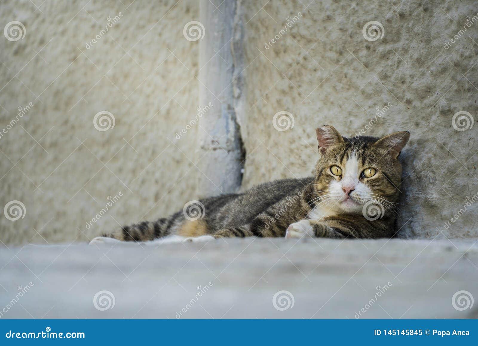 Adult abandoned stray cat looking sad at the camera