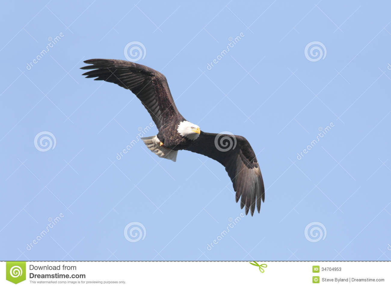 Bald Eagle Sex 12