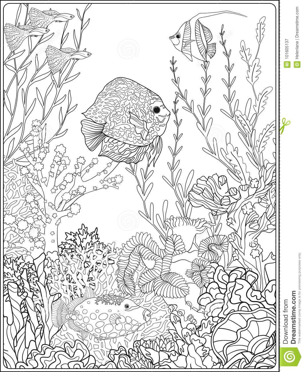 82 Coloring Book Fish Pictures Free Images