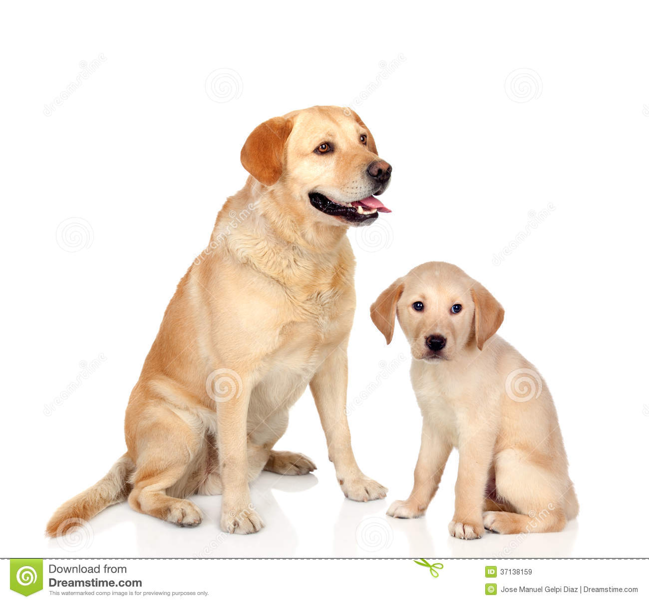 Adult Dog With Puppy Sitting Royalty Free Stock Images - Image ...