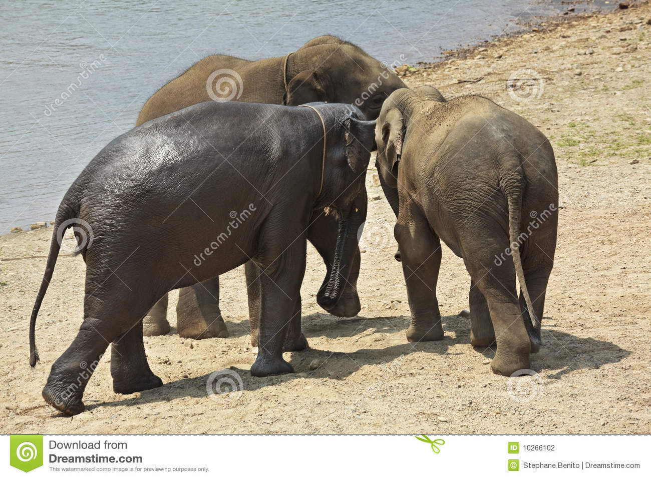 Join. And Elephant adults only