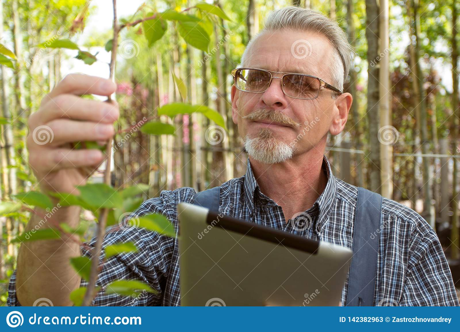 Adult gardener in the garden shop inspects plants. In the glasses, a beard, wearing overalls