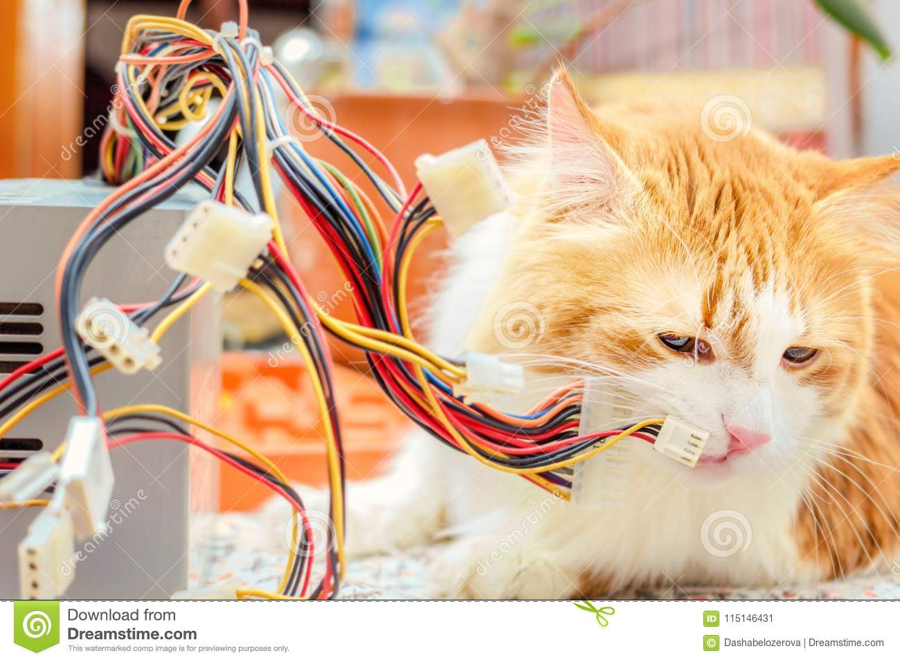 Adult Red Cat And Computer Wires Stock Image - Image of electronic ...