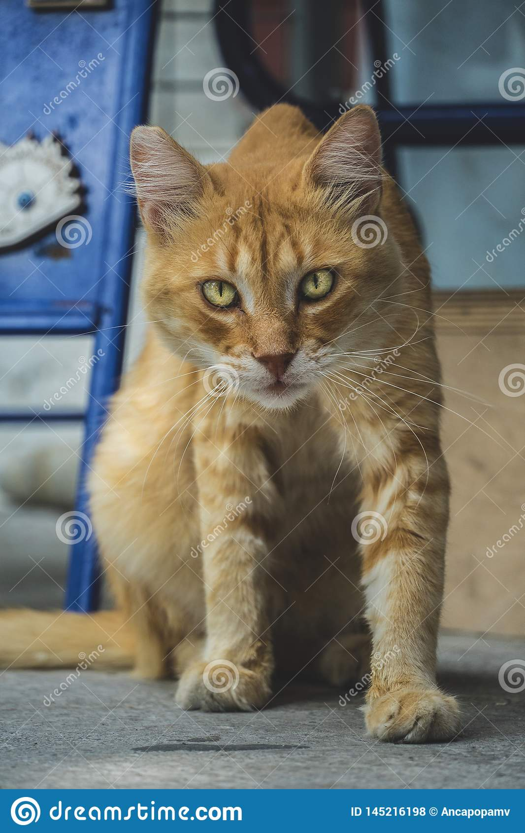 Adult stray orange tabby cat with golden eyes, looking curious at the camera
