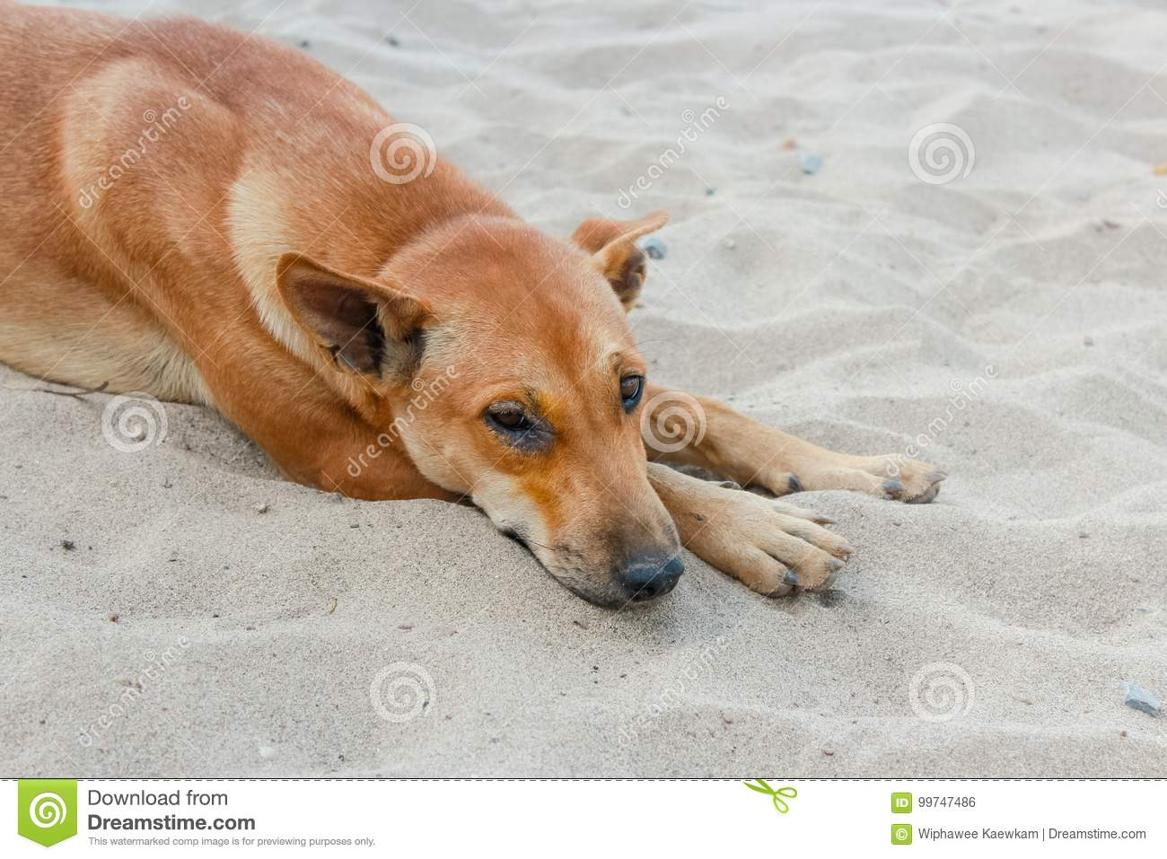 Sick dog lying down on the ground