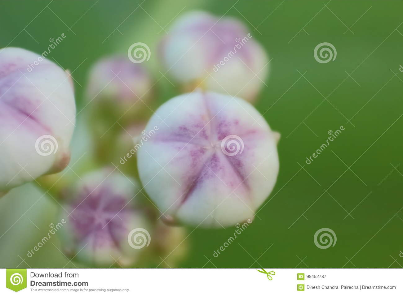 advent of new flowers, background, macro photography stock image