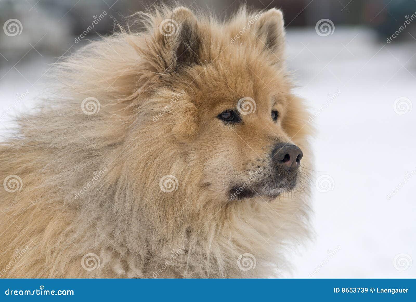 Advertent dog
