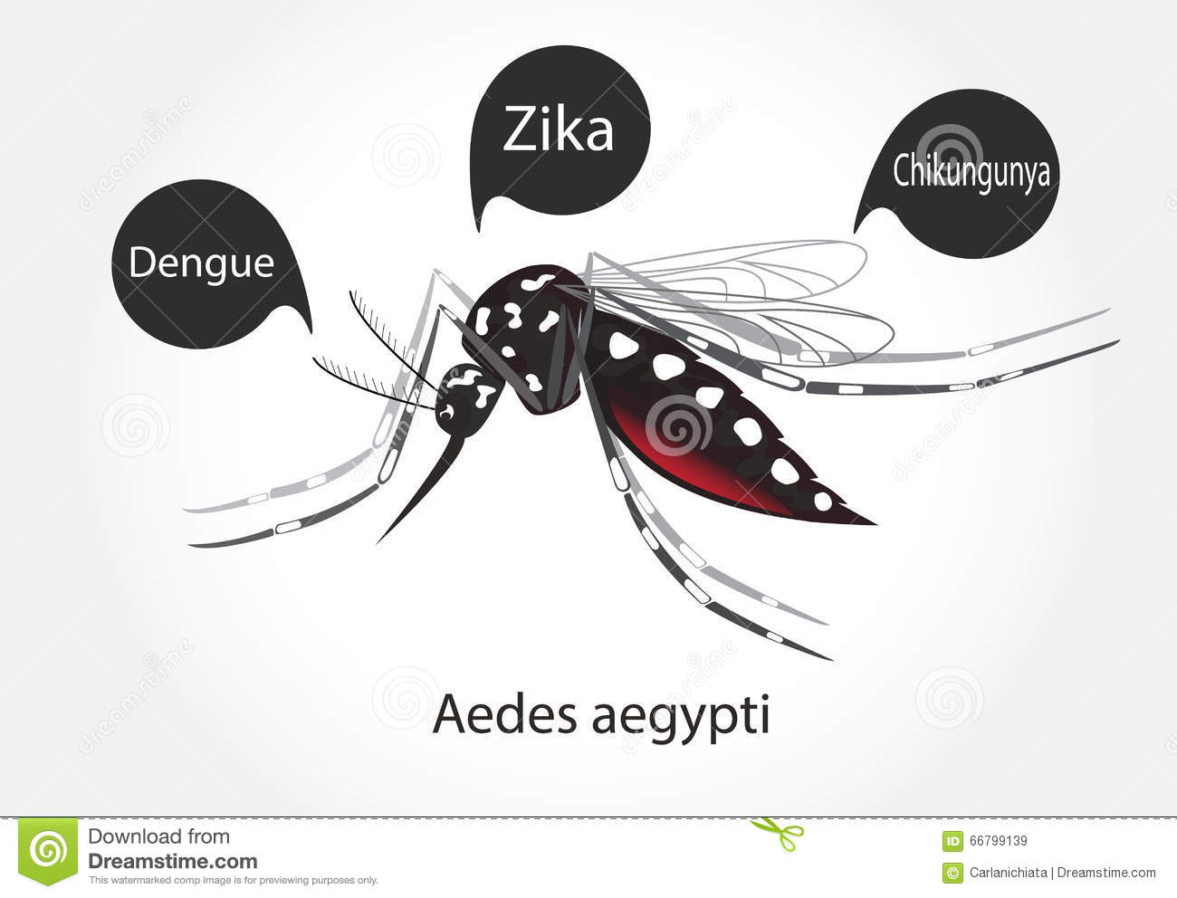 Aedes Zika Stock Vector Image 66799139