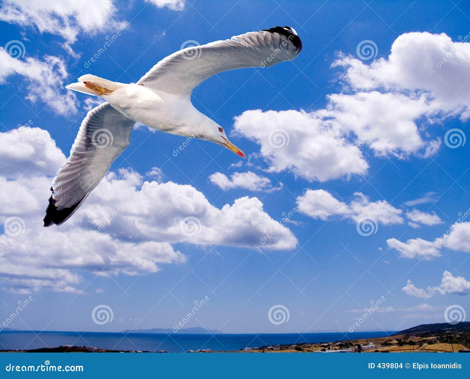 Aegean flyg över seagull