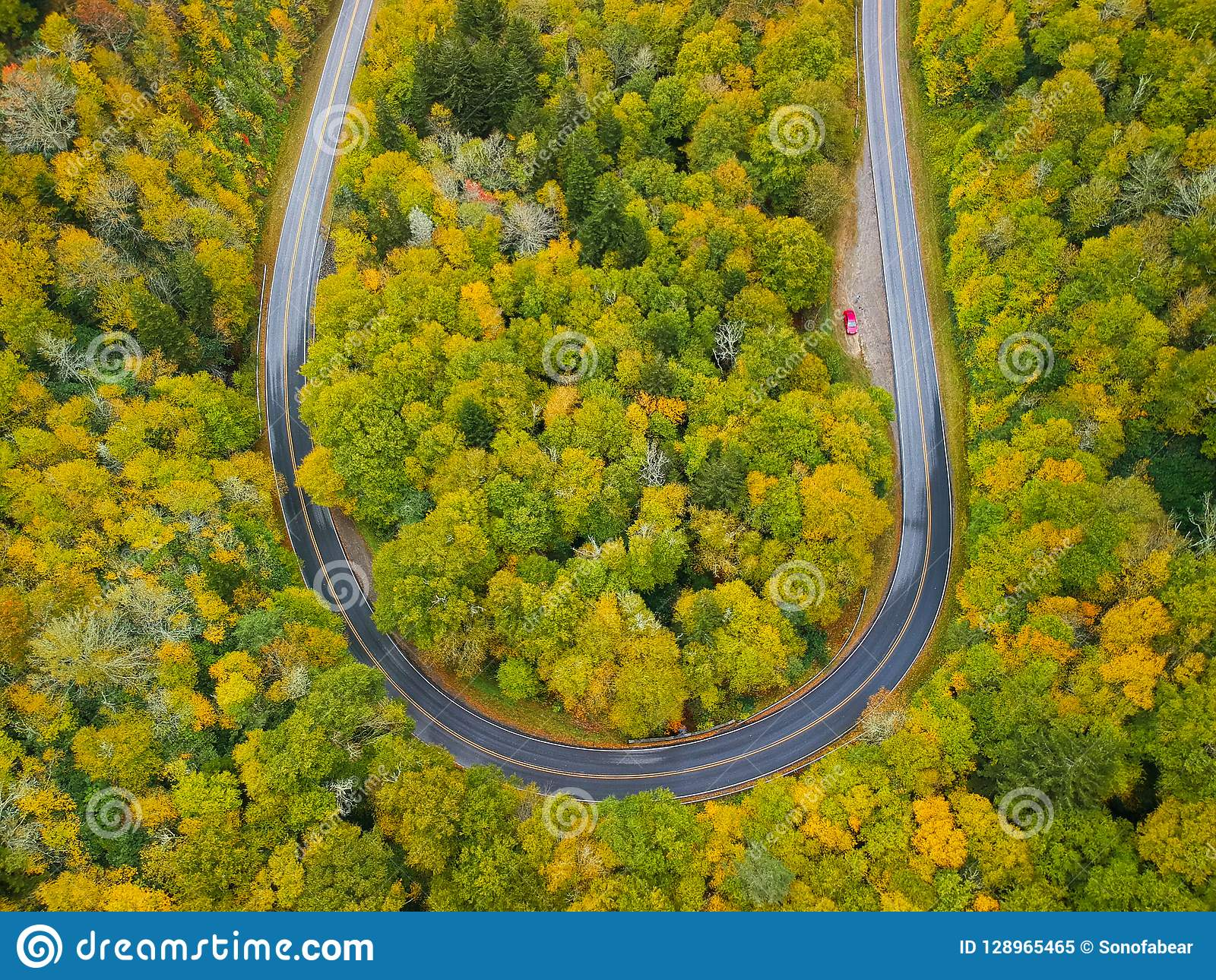 Aerial drone view of U Turn Road Curve in Autumn / Fall foliage overhead. Blue Ridge in the Appalachian Mountains near Asheville,