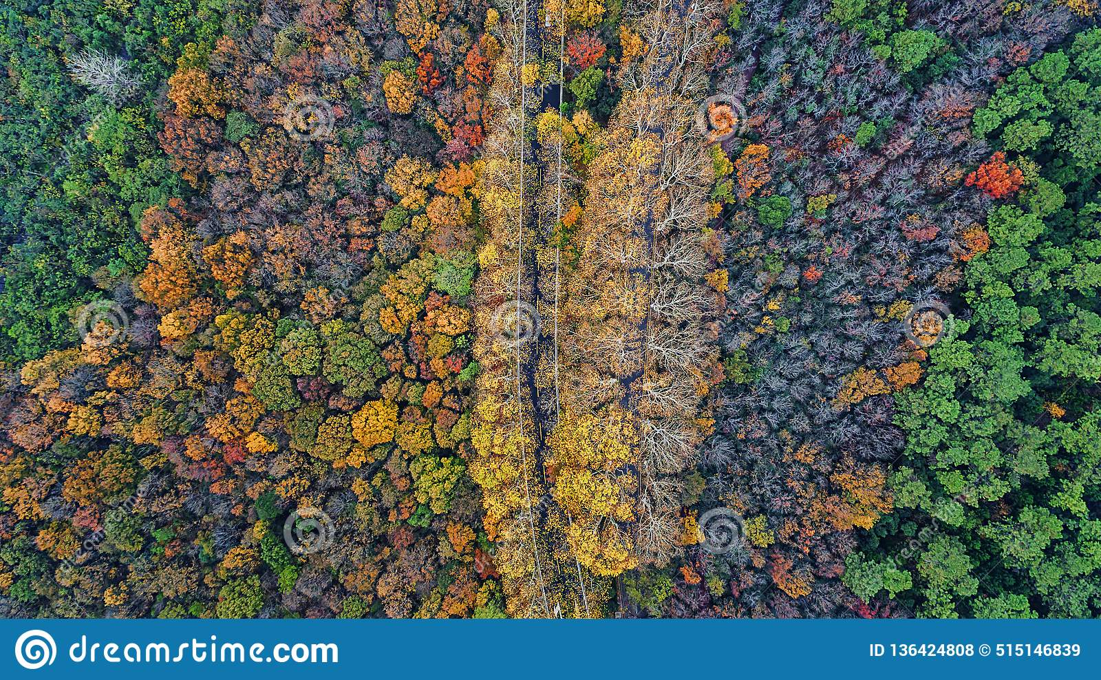 Aerial photography - botanical garden autumn scenery