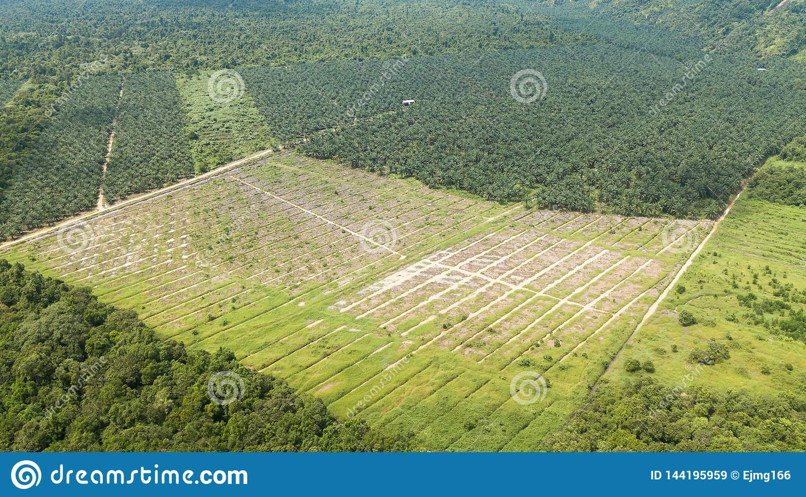 Aerial shot in borneo of palm oil and rubber plantation
