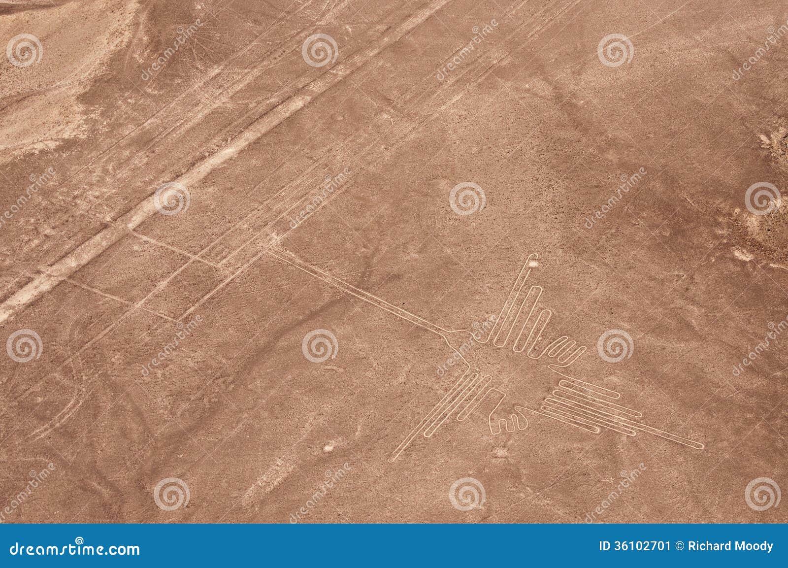 Aerial Shot of Nazca Hummingbird
