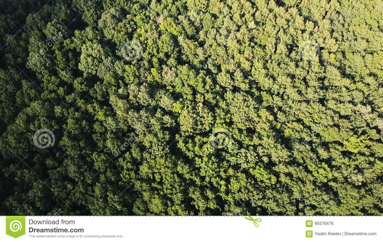 Aerial Top Down View Flying Over The Beautiful Green Forest Trees Camera Shot Landscape Panorama Stock Footage