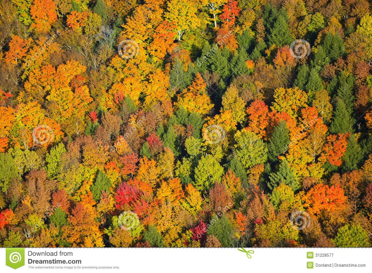 Aerial View Of Fall Foliage In Vermont Royalty Free Stock