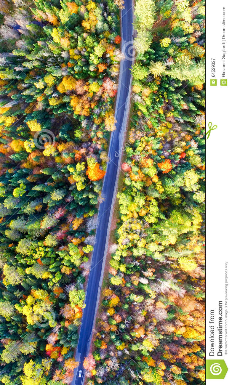 Aerial View Of Fall Tree Colors In New England. Bright Autumn Fo ...