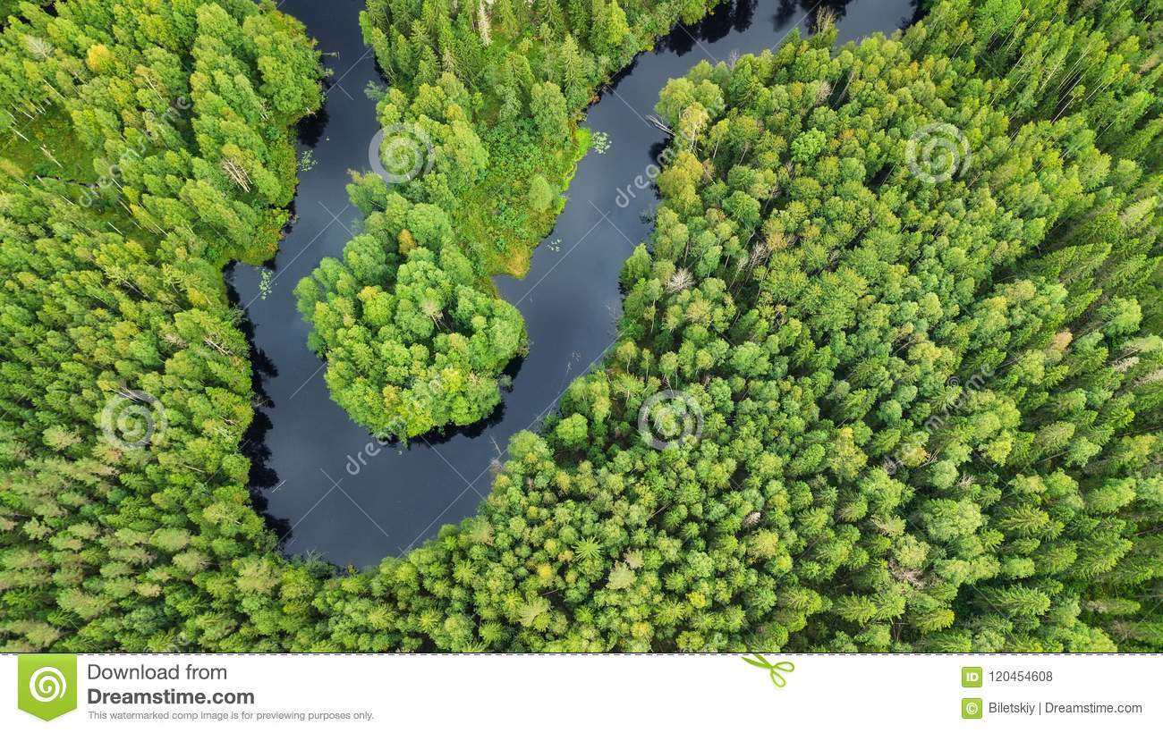 Aerial view on the forest and river