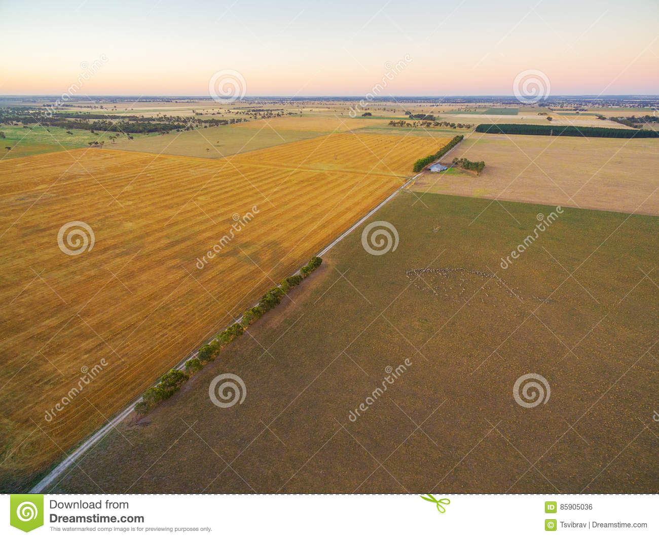 Aerial view of harvested agricultural field and pastures at suns