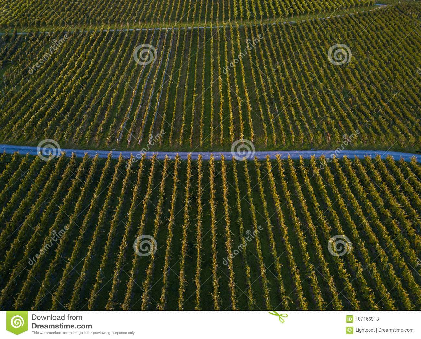 Aerial view over vineyard fields